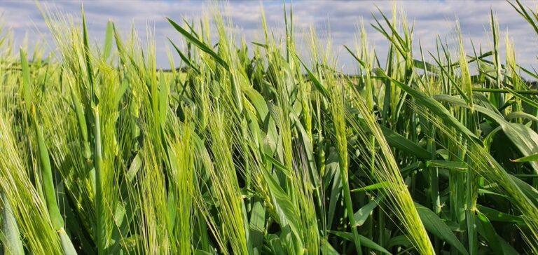 poljoprivreda u doba korone 001